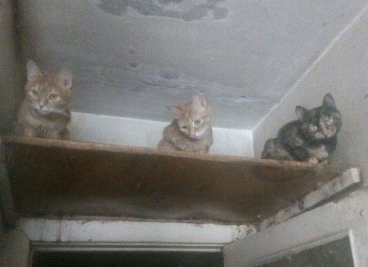 В Уфе из квартиры вывезли целый грузовик мусора и более 10 кошек