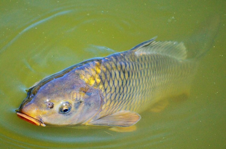 В Башкирии организованы рейды по изъятию из оборота незаконно выловленной рыбы