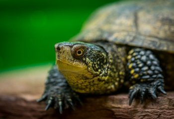 Учитель биологии скормил щенка черепахе на глазах школьников