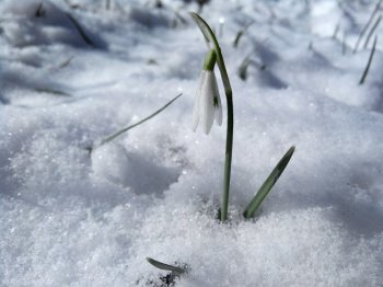 Синоптики сообщили о погоде в Башкирии 16, 17 и 18 марта