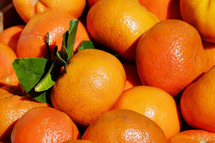 В России запретили ввоз фруктов и орехов из Абхазии