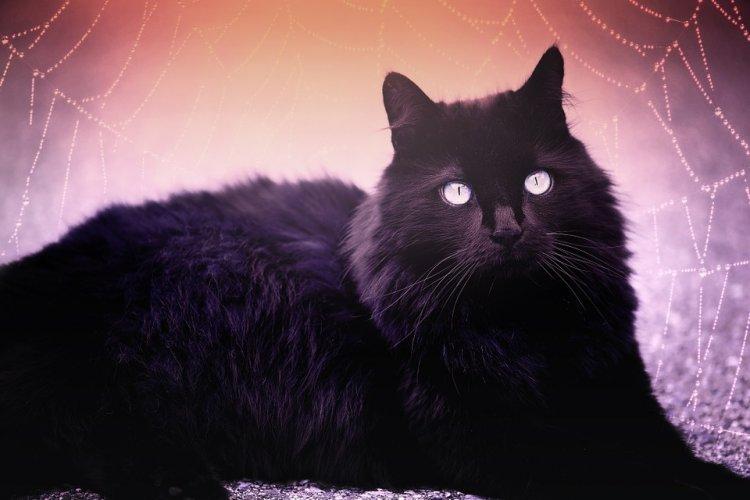 О чем предупреждает чёрная кошка во сне?