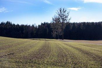 В Башкирии признаны слабыми 15% посевов с озимыми культурами
