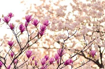 Акшая Тритья 18 апреля: самый удачный, сильный и благоприятный день в 2018 году