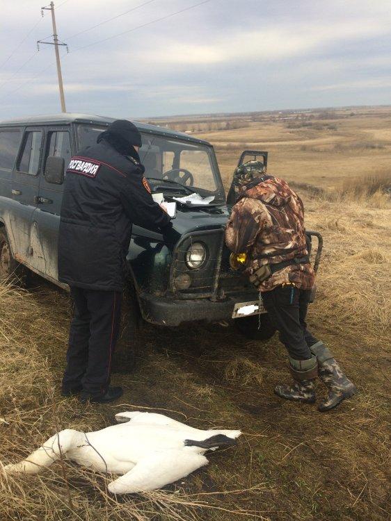 В Башкирии сотрудники Росгвардии задержали браконьера за незаконный  отстрел краснокнижного лебедя-шипуна