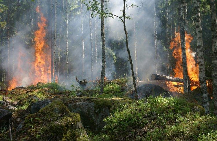 МЧС объявило штормовое предупреждение по пожарам в Башкирии