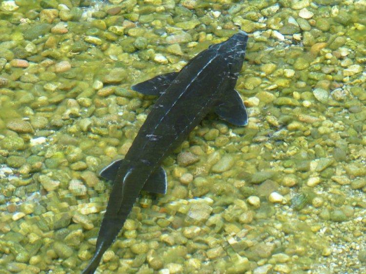 В Башкортостане помогут с развитием рыбоводства