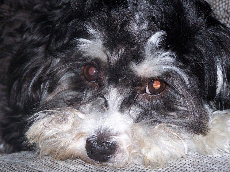 Уфимские спасатели за сутки дважды выезжали вызволять собак из заточения