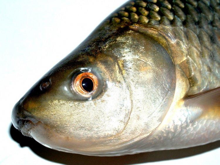 Жителя Башкирии задержали за ловлю рыбы во время нереста