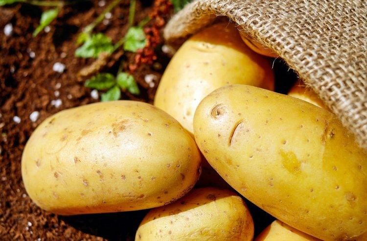 В Башкирии посажено почти 1,9 тысяч гектаров картофеля