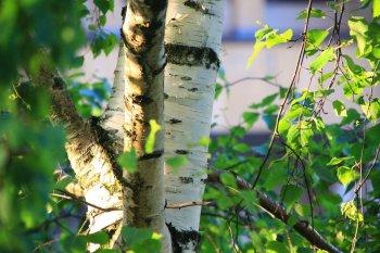Зеленые святки с 20 по 26 мая 2018 года: традиции, обряды и приметы на неделе перед Троицей