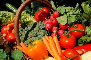 В Стерлитамаке определены места торговли садово-огороднической продукции