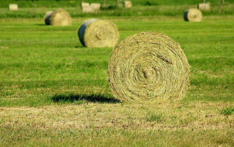 В Башкортостане заготовлено почти 100 тысяч тонн сенажа