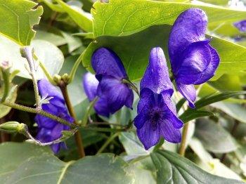 Жителей Башкирии предупреждают об опасных растениях