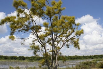 В Башкирии прогнозируется усиление ветра