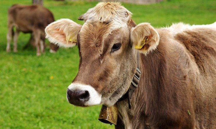 В Башкирии утверждена «дорожная карта» по мясному скотоводству