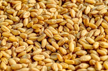 Экспортные перевозки зерна в Башкирском регионе увеличились в десять раз
