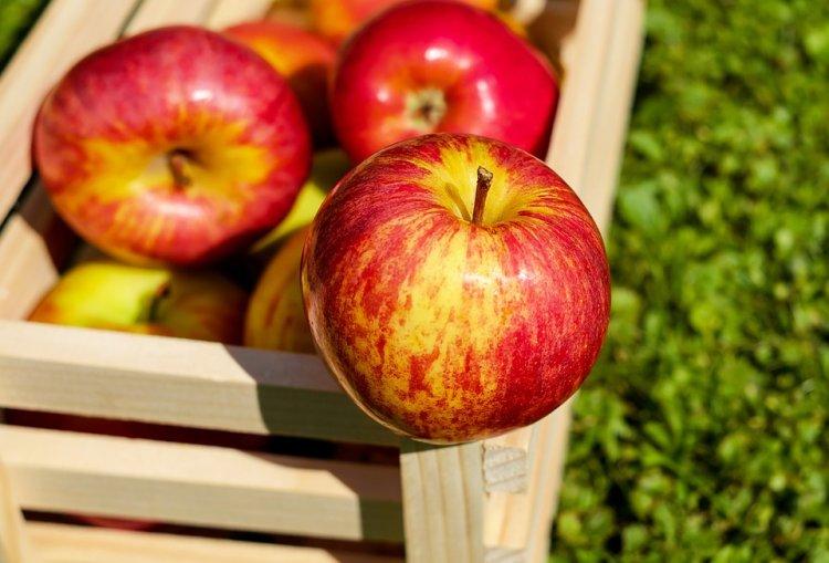 Роскачество рассказало, как выбрать хорошие яблоки