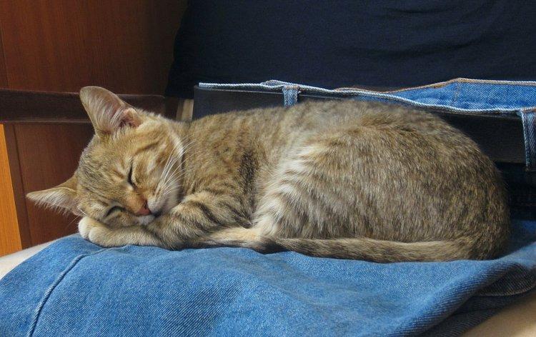 Ученые выяснили, как кошки влияют на здоровье мужчин