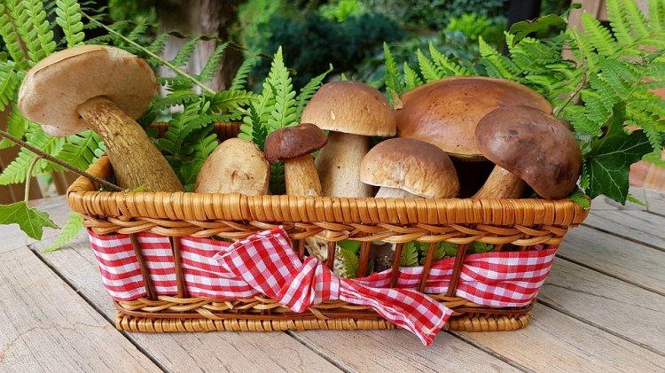 Роспотребнадзор рассказал о правилах сбора и хранения грибов