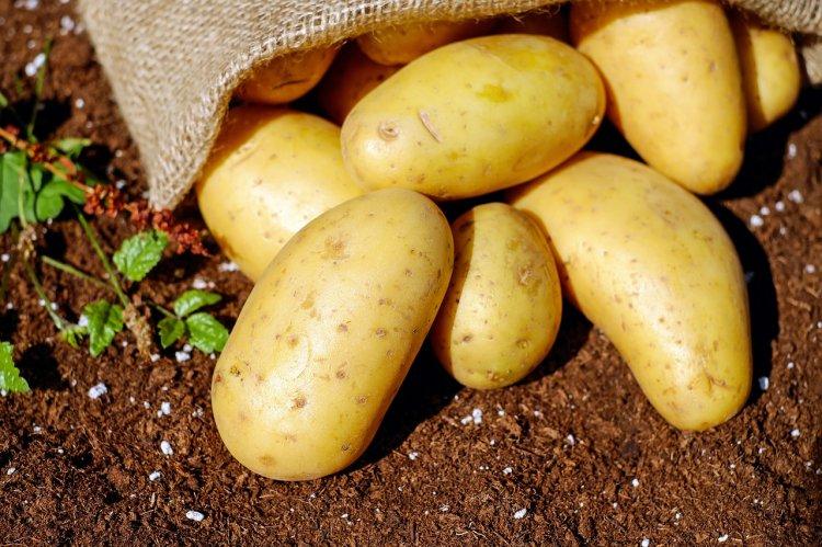 Вот почему не стоит копать картошку с родственниками