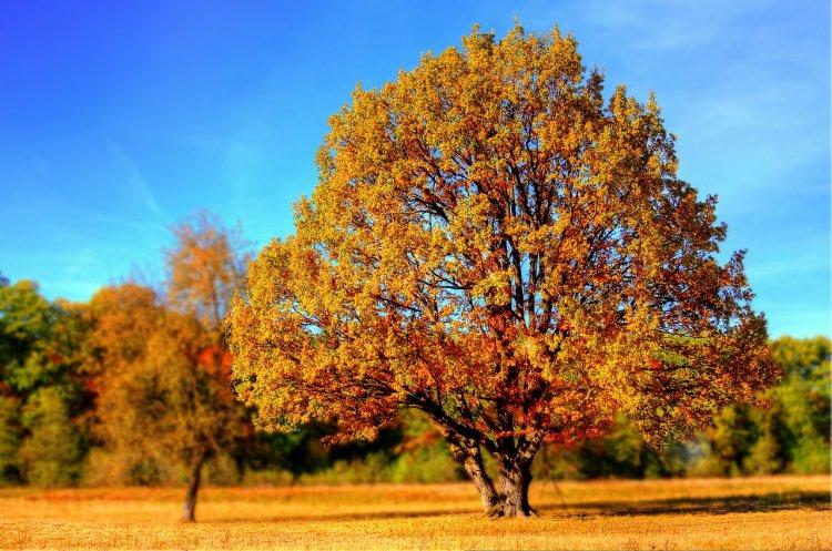 Метеорологи сделали прогноз жителям Башкирии на 14, 15 и 16 сентября