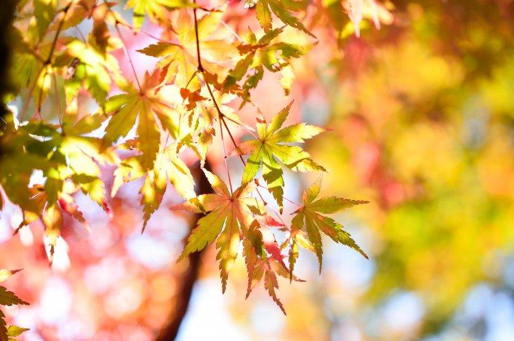 День осеннего равноденствия 23 сентября 2018 года