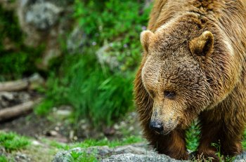 Жителей Башкирии предупреждают об активности медведей