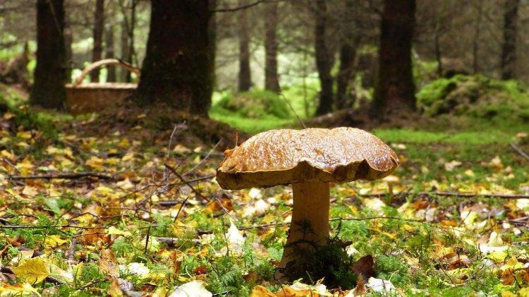 Названы самые опасные леса в Уфе для грибников