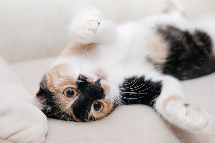 Почему кошка мяукает без причины. 10 поводов!