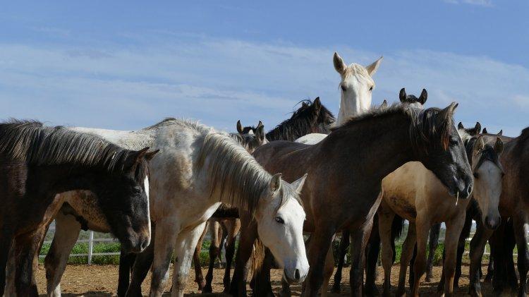 Полицейские Башкирии раскрыли кражу 17 лошадей
