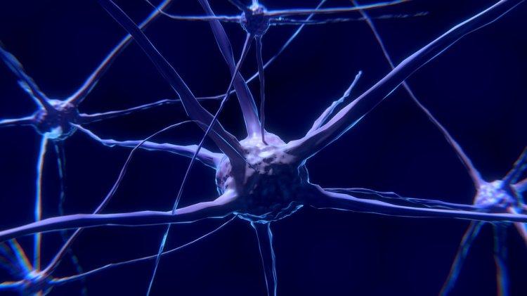 Ученые: новые нервные клетки образуются даже в пожилом возрасте