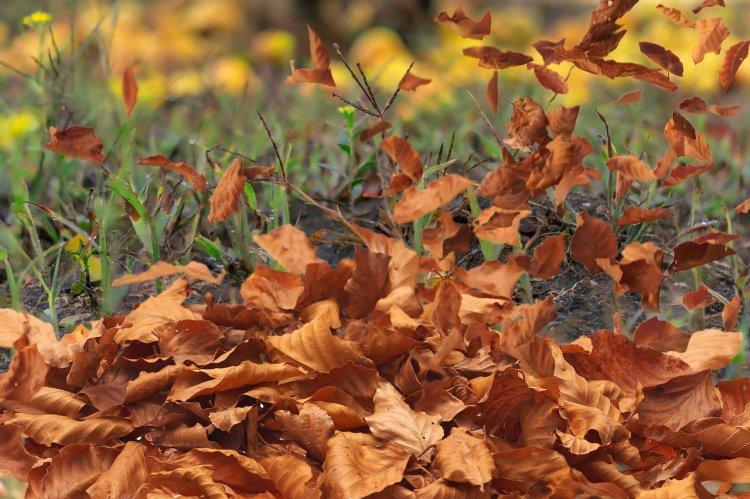 Осторожно, ветер: в Башкирии объявили штормовое предупреждение