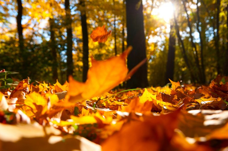 Синоптики озвучили прогноз погоды на 19, 20 и 21 октября в Башкирии