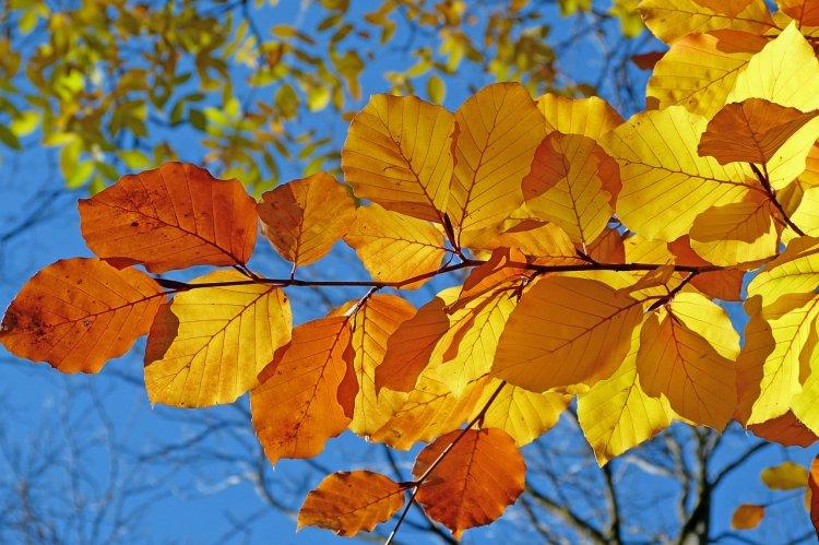 Синоптики озвучили прогноз погоды на 22, 23 и 24 октября в Башкирии