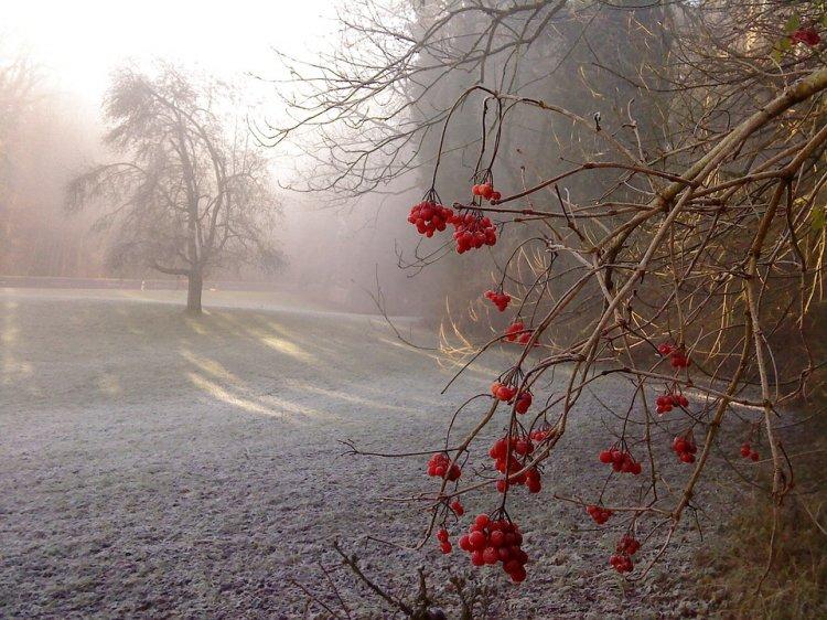 В Башкирии ожидаются заморозки до -8 градусов и густой туман
