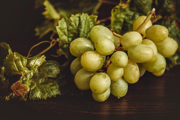 В Башкортостане ученые выращивают морозостойкие сорта винограда