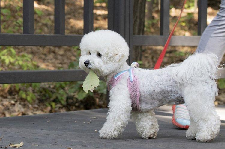 Отдать собаку на прогулку в Уфе можно за 838 рублей