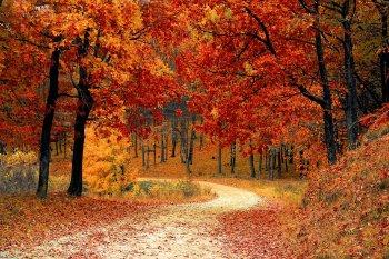 День памяти Иоанна Богослова 9 октября 2018 года: приметы и традиции