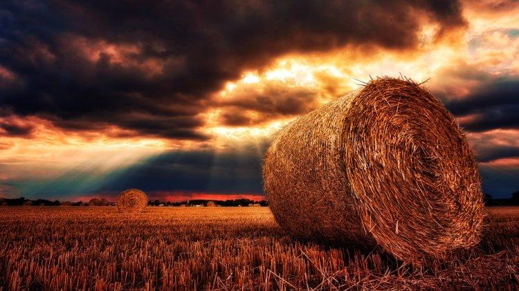Башкирия укрепила позиции в числе лидеров аграрного производства