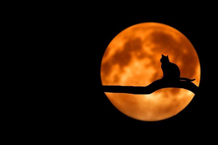Ученые нашли самую кровожадную кошку на планете