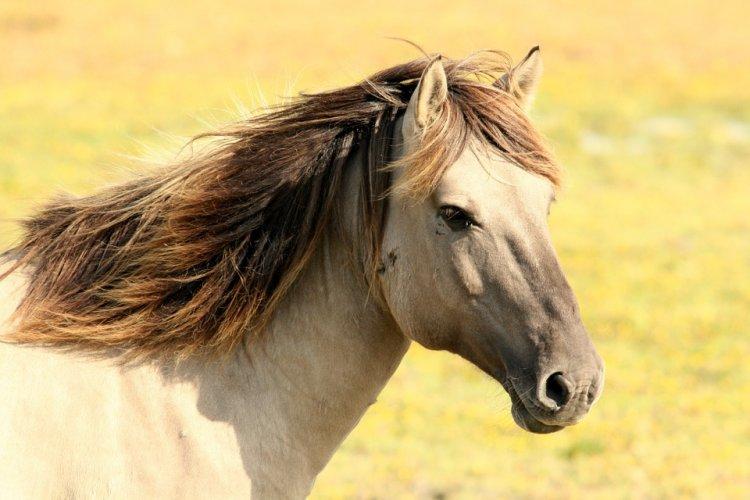 В Башкирии жители обратились к врио Главы республики с просьбой проконтролировать ход дела об отстреле лошадей