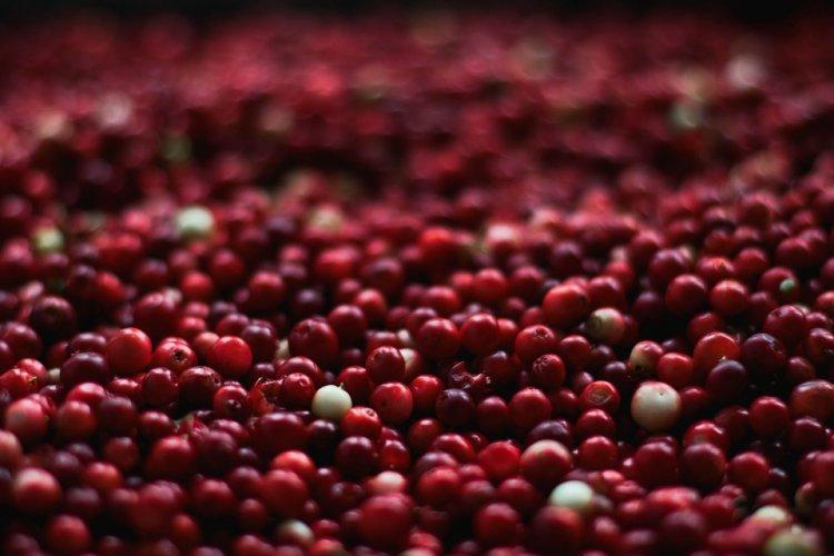 Медики назвали ягоду, которая спасает от многих болезней