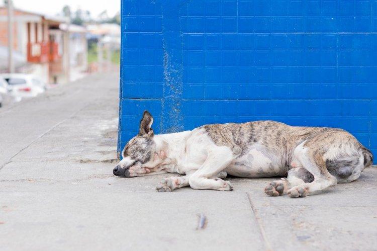 В Стерлитамаке зоозащитников возмутил массовый отстрел бродячих собак