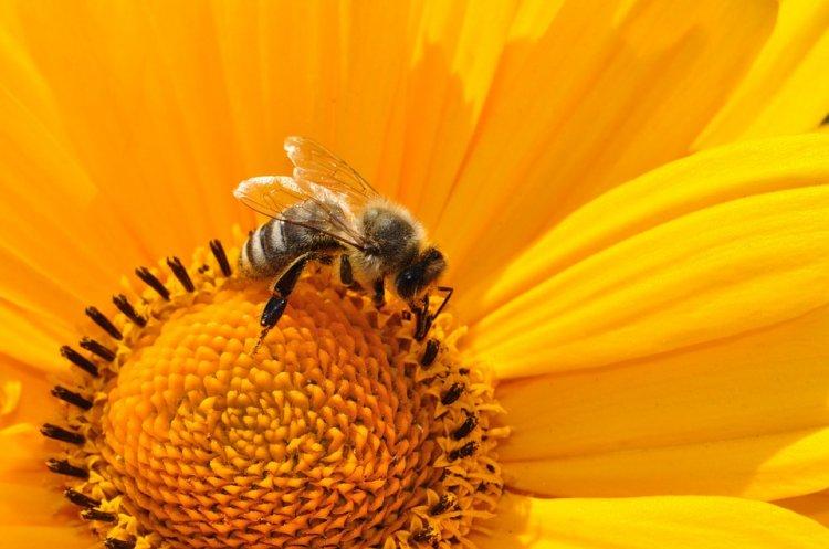 В Башкирии на спасение уникального вида пчелы башкирские власти выделят 38 млн рублей