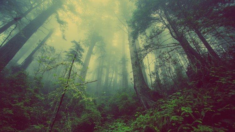 В Уфимском районе мужчина незаконно вырубал деревья