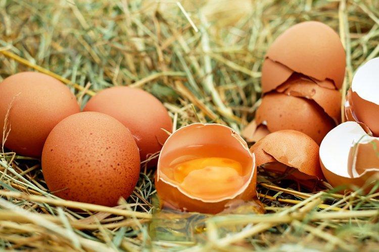 Эксперты «Росконтроля» оценивали качество куриных яиц