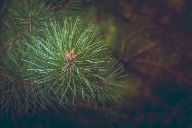 В лесах Башкирии усилили контроль за незаконной вырубкой деревьев