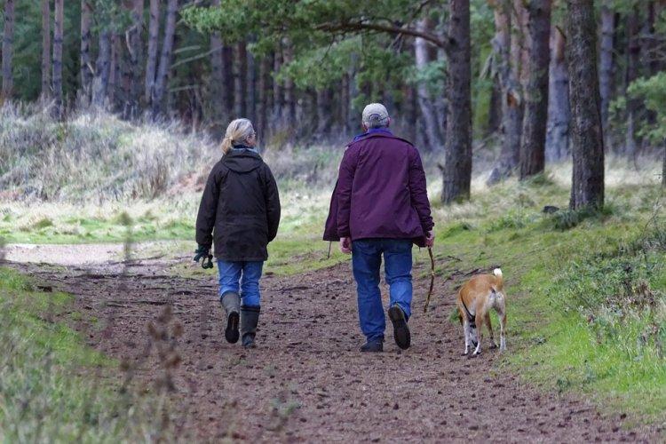 Российские ученые рассказали об опасностях прогулок с собаками