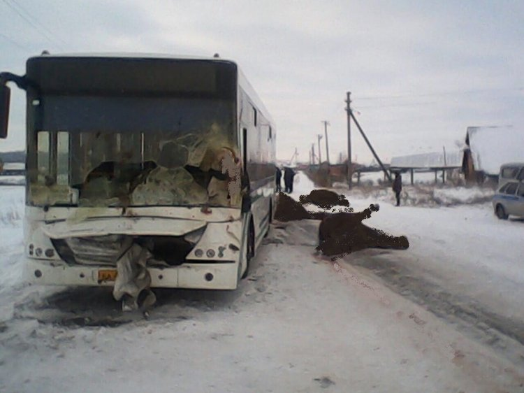 В Башкирии пассажирский автобус «НефАЗ» протаранил табун лошадей